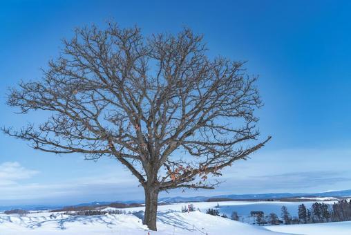 세븐 스타의 나무 3
