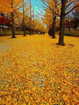 Ginkgo bunko _ Deepening fall