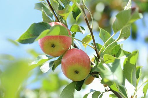 Princess two apples