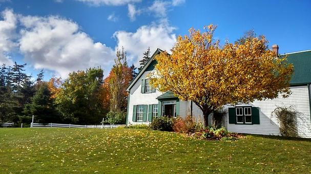 가을 그린 게이 불스 autumn green gables