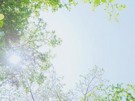 新鮮的綠色和陽光蓬鬆的粉彩