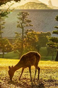 Nara Park (Nara City)