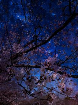 Image of cherry blossoms at night