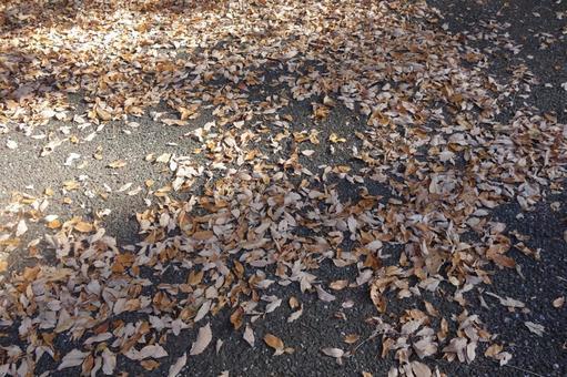 Fallen leaves scattered on the sidewalk