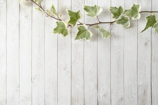 Ivy and white wood grain floor frame