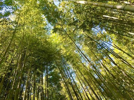 대나무 숲 바오 구오 사원