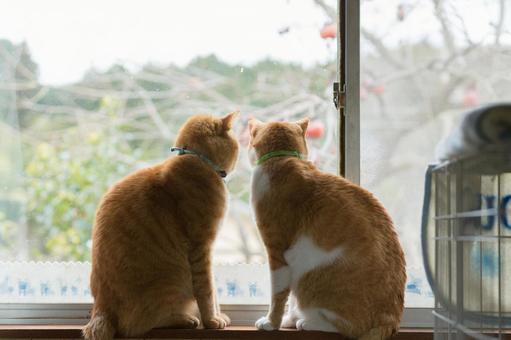 창가에서 밖을 내다 단짝 고양이들