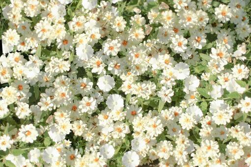 흰 꽃이 가득