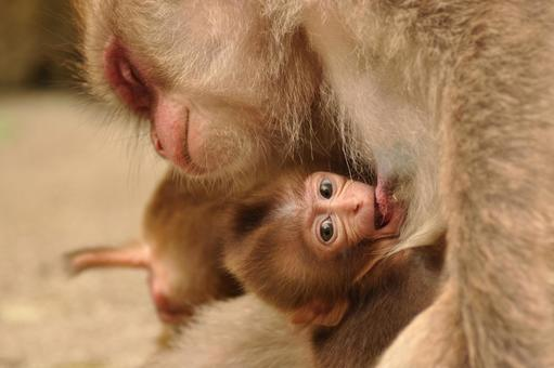 Monkey Record 5