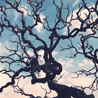 구불 구불 뻗은 나무와 푸른 하늘