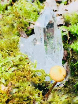 이끼와 크리스탈과 버섯