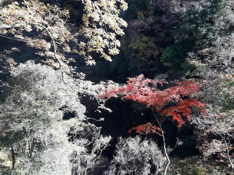 秋のコントラストの写真