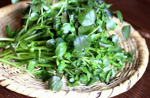 Watercress salad vegetables