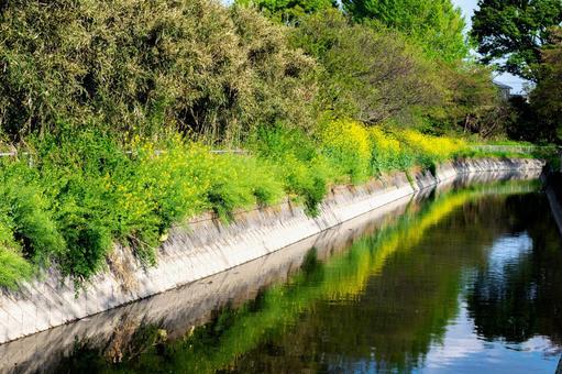 見沼 수로의 풍경