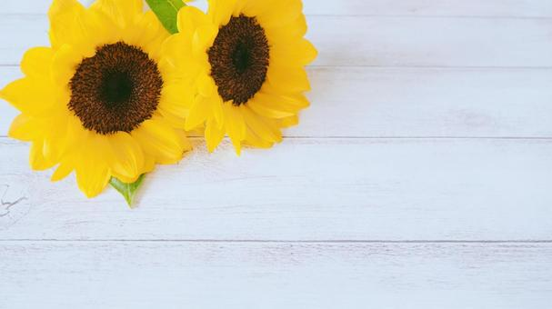 Sunflower summer image background material (16: 9)