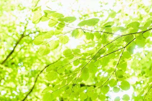 New green image