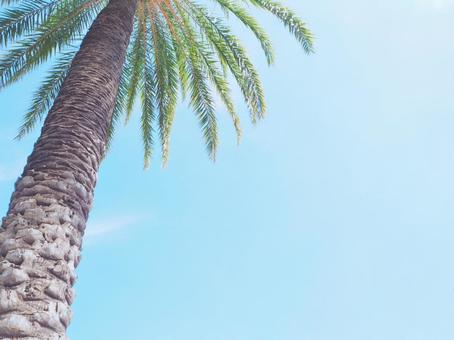 Summer image wallpaper palm trees and sky