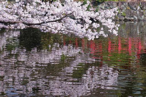 Spring full bloom