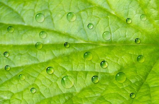 Green background material water drops raindrops drop image psd