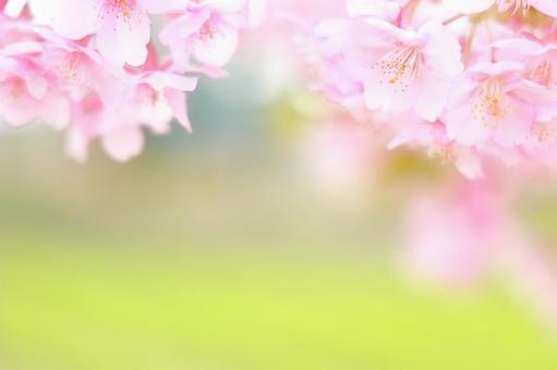 벚꽃과 배경