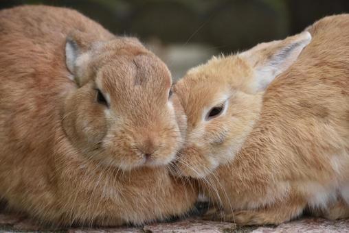 Good friend rabbit