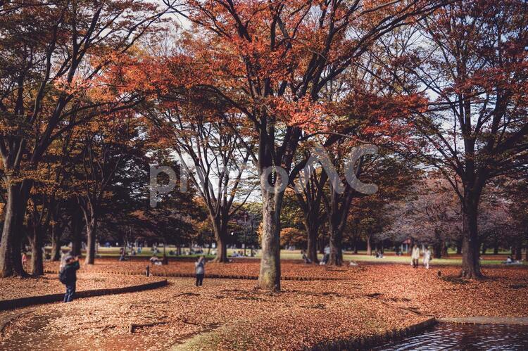 紅葉に覆われた代々木公園の写真