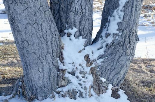 Winter trees in winter 13