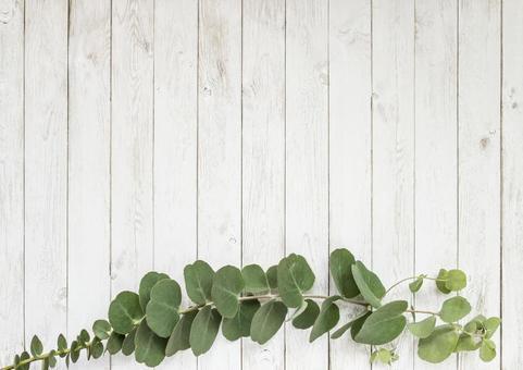 桉木和白色木紋地板框架