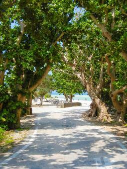 <Taketomi Island> Condoi Beach