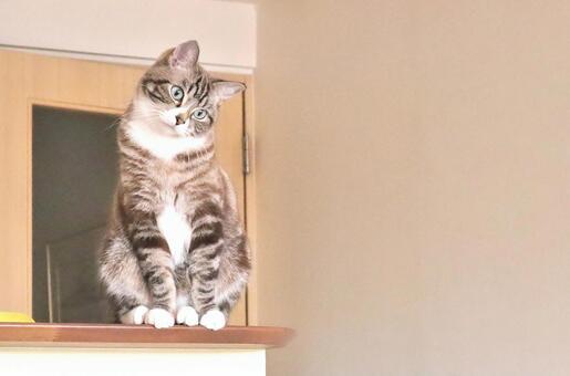 고개를 갸웃하고 고민하는 귀여운 고양이