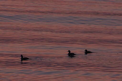 새벽의 바다 .. 시노리가모