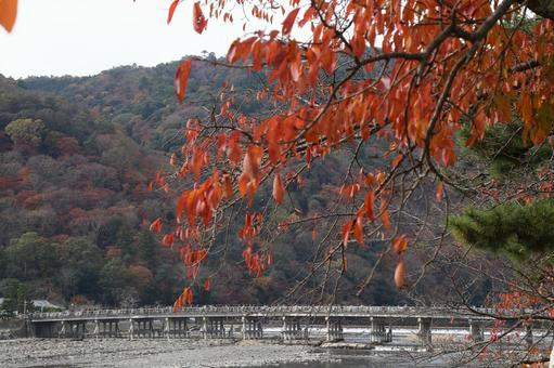 Kyoto Autumn leaves Arashiyama in Kyoto