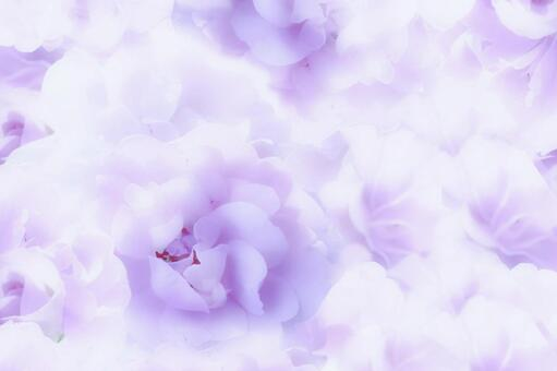 Rose background material purple