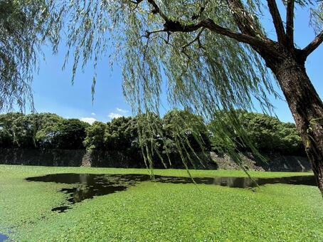 수초가 우거진 연못