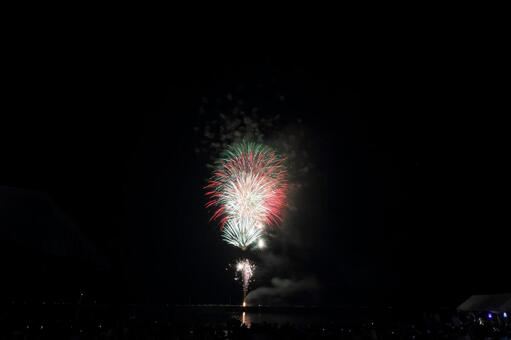 Fireworks split chrysanthemum