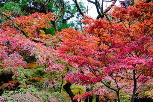 Kyoto autumn leaves landscape