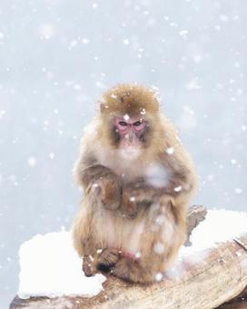 Popular in Maruyama zoo