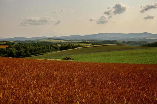 비 에이 赤麦 언덕
