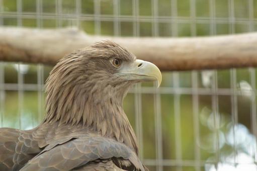 The eagle's profile