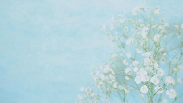 부드러운 안개 잔디 1 민트 블루 16 : 9