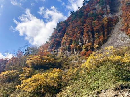 Akita's autumn leaves and sky