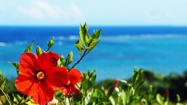 붉은 히비스커스와 바다