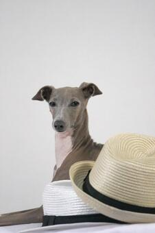 Hat and dog
