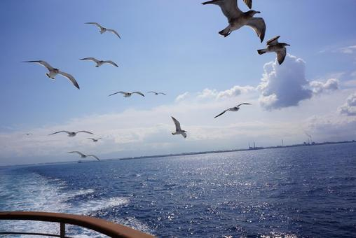 Voyage and seagulls