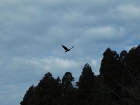 흐린 날에 아래를 까마귀가 날아 둥지 구로 리사