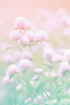 Autumn flowers -2