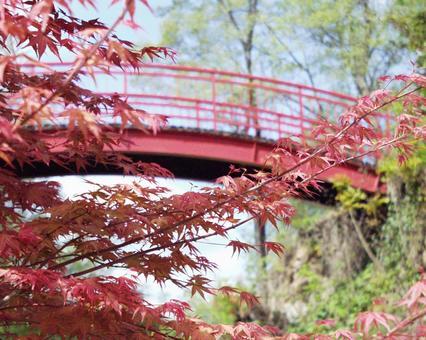모미지와 붉은 다리