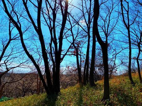 초봄의 야산