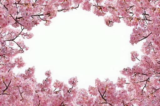 Sakura gathering Kirinuki (psd background transparent)