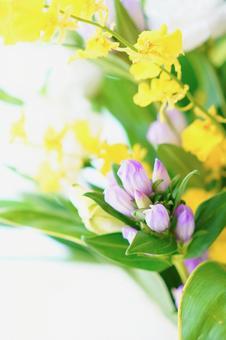 Purple, yellow and white Buddha flowers